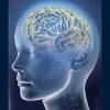 Распознавание патологий головного мозга.