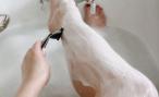 Как избавиться от волос на теле?