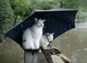 Сохраняем летнее настроение в дождливый осенний день