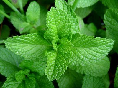 herbal_tea2